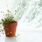 首掛け空気清浄機 アイブルエアビーダの口コミは?花粉への効果は?